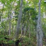 白神の香りと森を体感するワンダーリング・実習養成講座報告