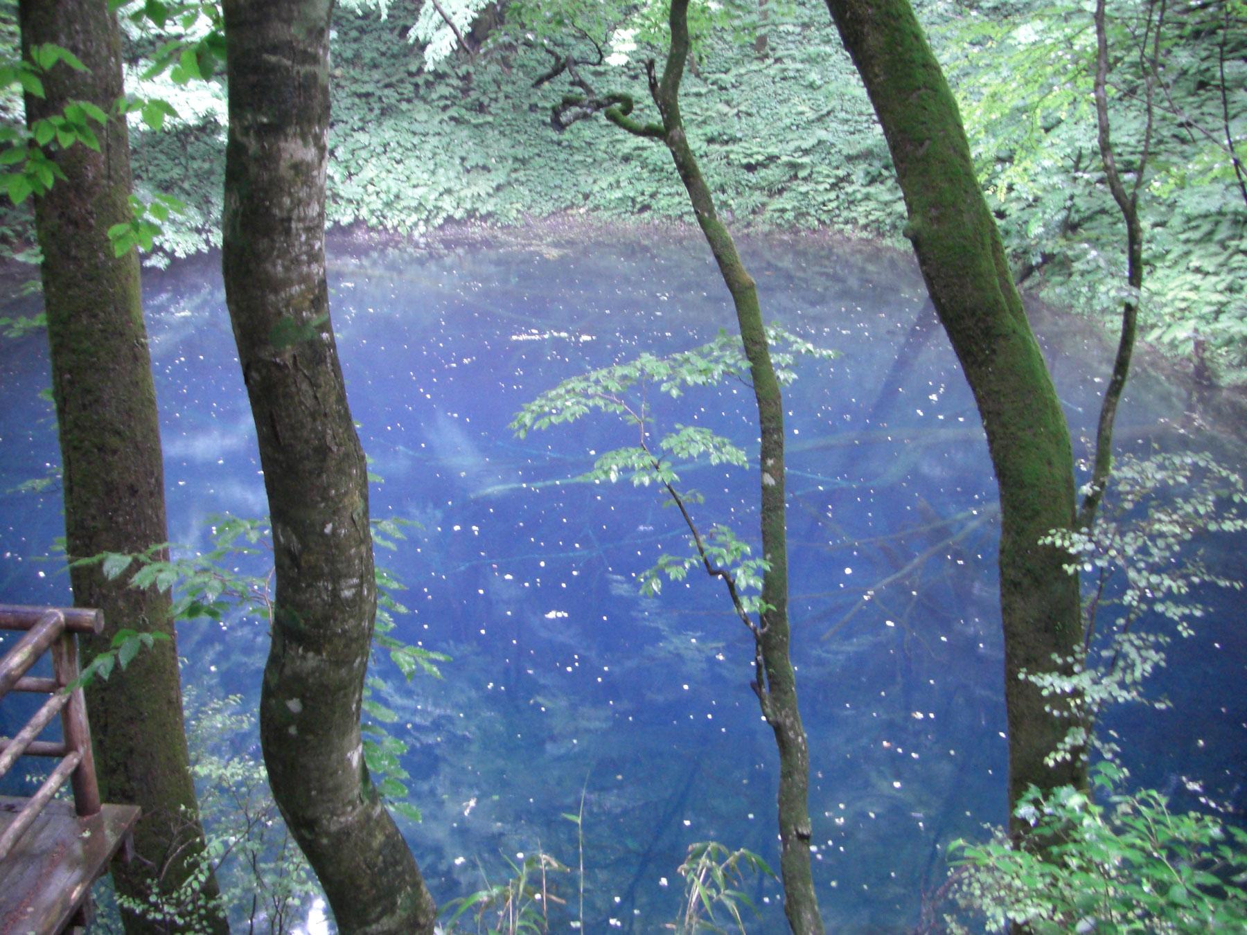 お昼の昇天時に写した青池の写真です