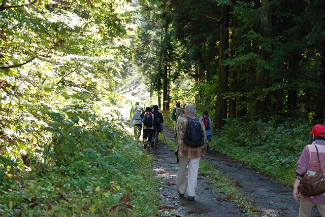 小森林道を進む参加者