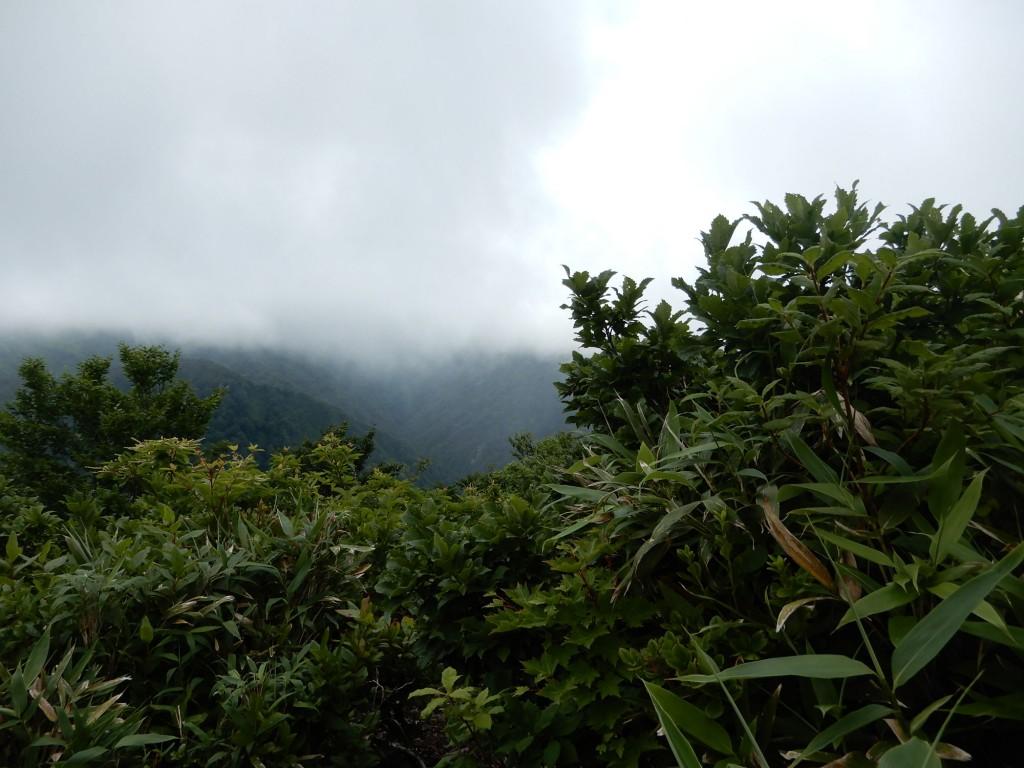 今年の天狗岳山頂はガス化してまったく見えませんでした