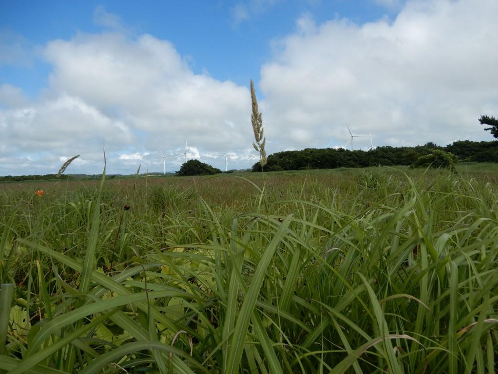 7月はニッコウキスゲなど花が少なかったですが、それはそれでとても天気もよく、すがすがしい気持ちになりました。
